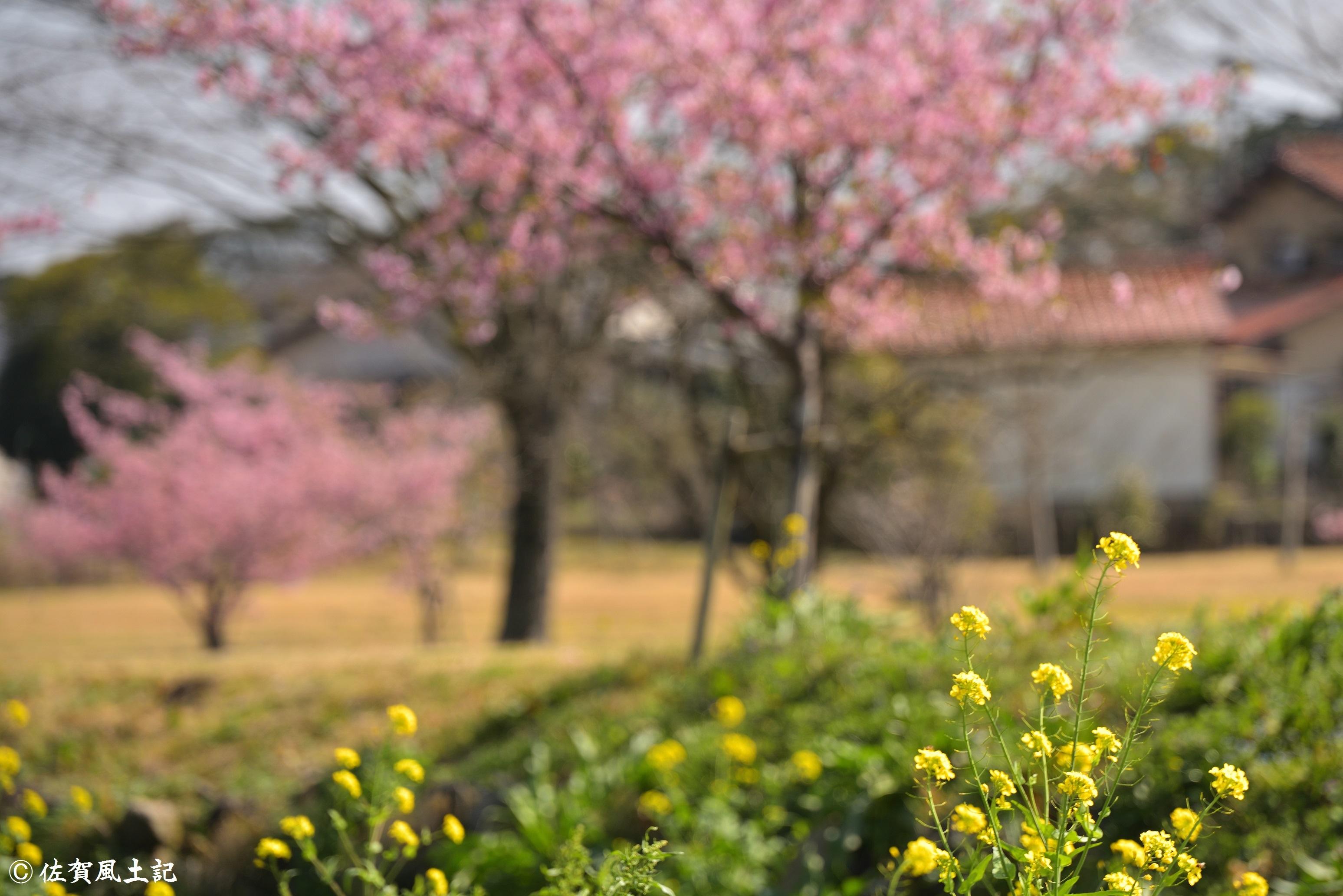 金立公園②