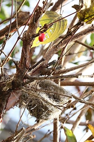 小鳥の巣 - コピー