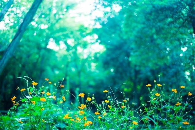 a76b0e8fecc83ff69cd37bf121a18df7_s森の中に咲く花