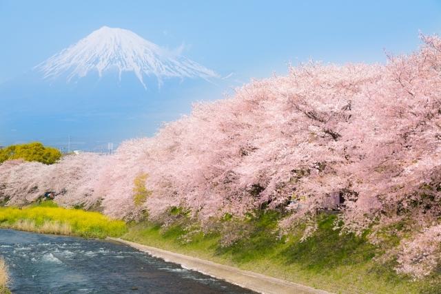 9e92657d2d8fbaa52125302aa9adab8f_s富士山と桜
