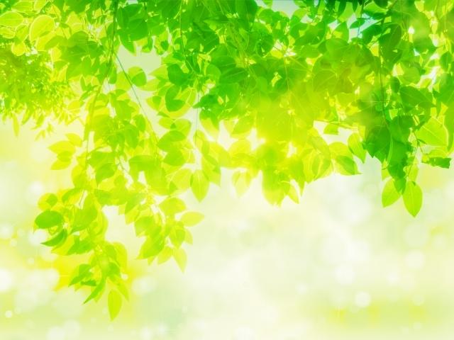4f56c0dd8ba9b27ab0b66993614c3f82_s新緑木漏れ日