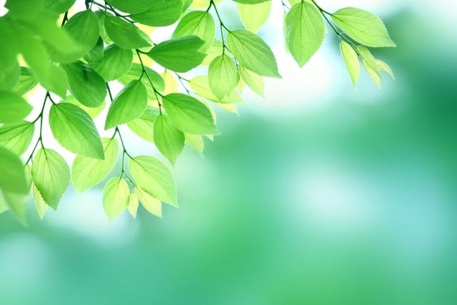 18038823abb07deb932e3e5f3d5b5dc7_s新緑イメージ