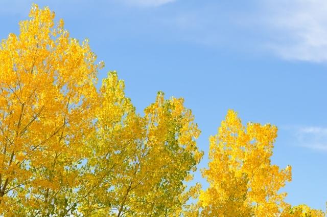 27432346856ed5e22baa1012f084374d_s黄色く紅葉した木