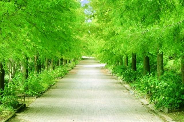 12c31cca997489523a4923bb854cba92_s公園の街路樹