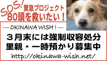 https://blogs.yahoo.co.jp/IMG/ybi/1/21/72/nine_chihuahuas/folder/114757/img_114757_1238946_0?20060325174543