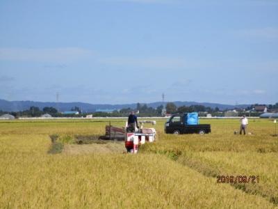 R109稲刈り7