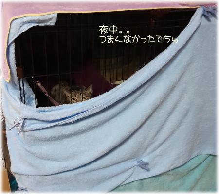 モコちゃん一週間目04