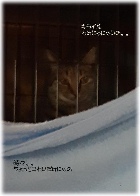 モコちゃん一週間目08