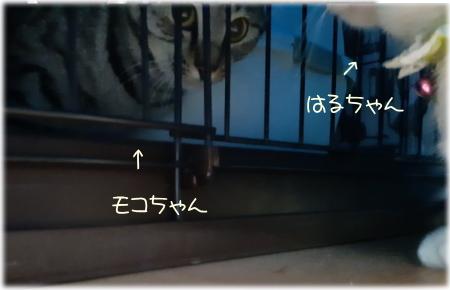 モコちゃん停滞期07