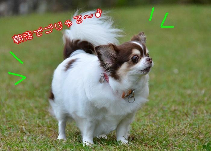 DSC_2079.jpg