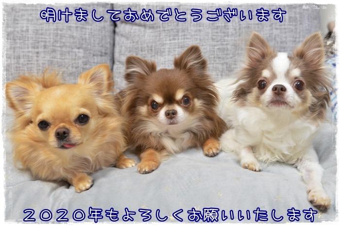 DSC_2521_2020010220170777f.jpg