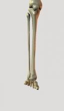 右下腿足前から回内