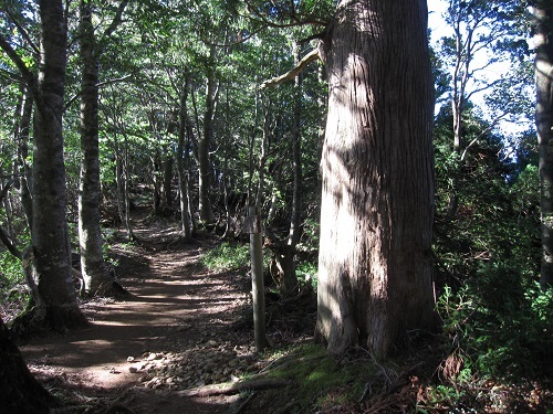 nosakadake010908 (14)