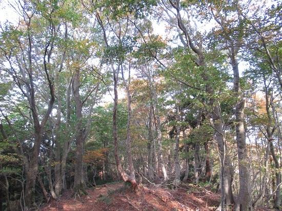 nosakadake011101 (28)
