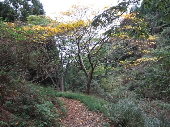 nosakadake011101 (46)