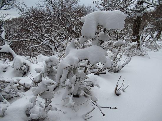 nosakadake011207 (19)
