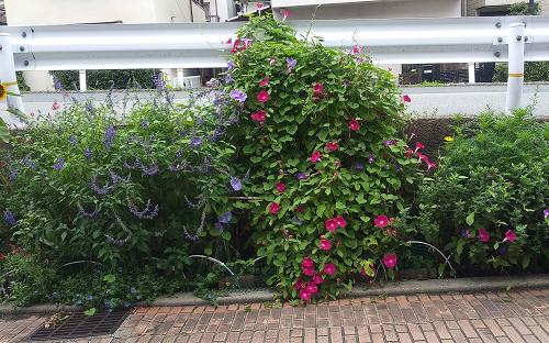 夏の花190901