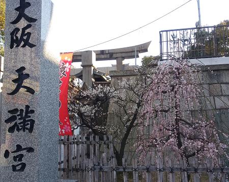 梅_大阪天満宮1