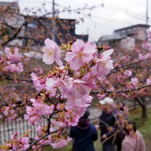 老重慶川菜館13