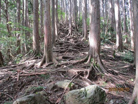 陣馬山への登り