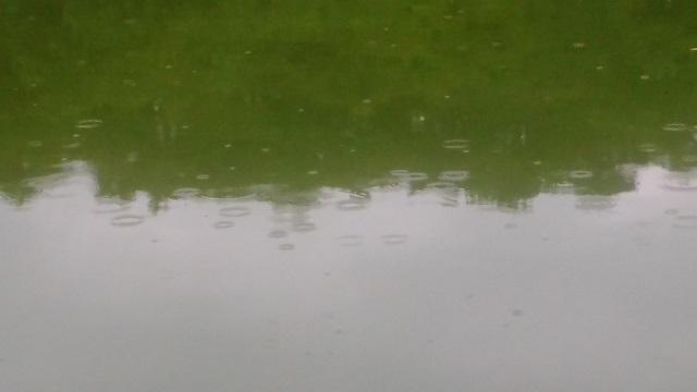 ボート池に雨