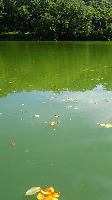 ボート池20190919
