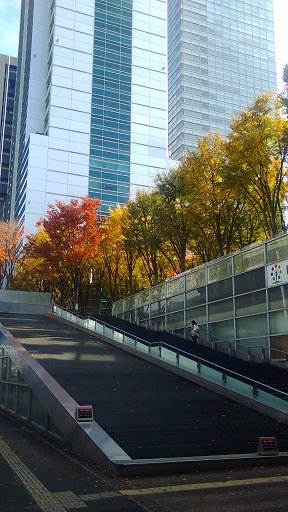ケヤキ広場20191119
