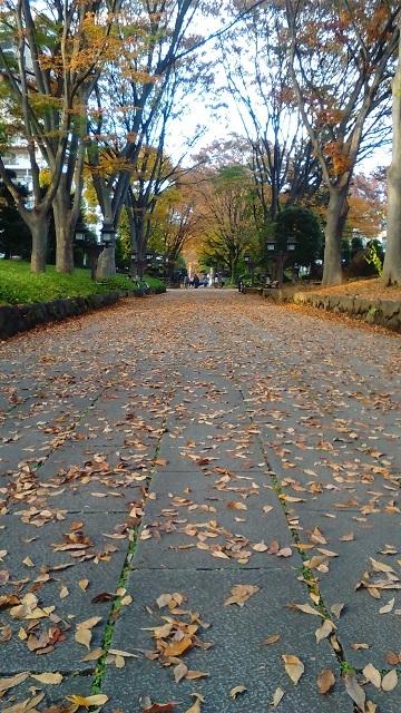 平成広場の落ち葉