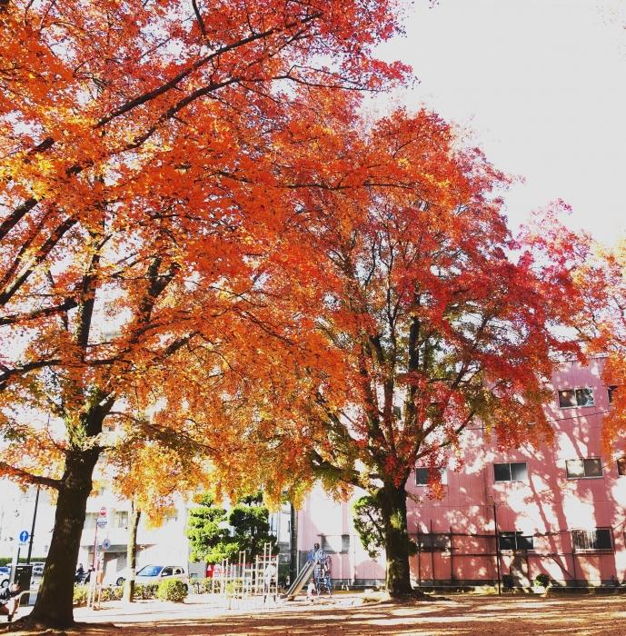 公園DSC02640 (1)紅葉