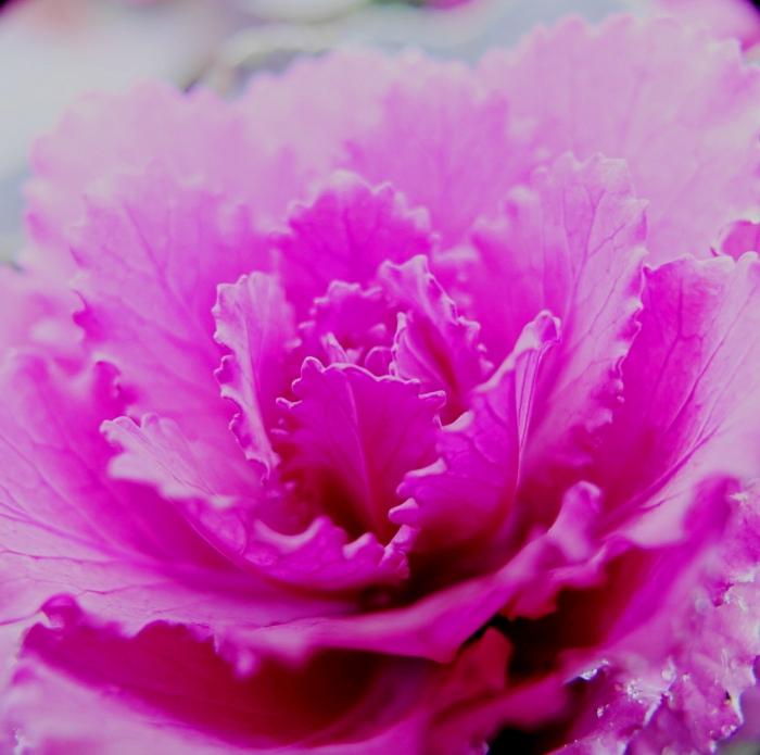 紫DSC03049 (1)