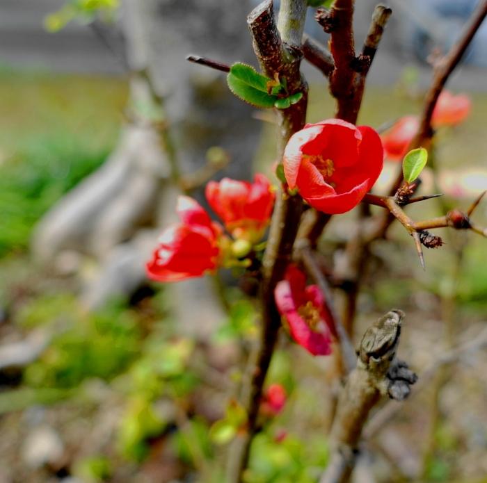 DSC03232 (1)紅い花