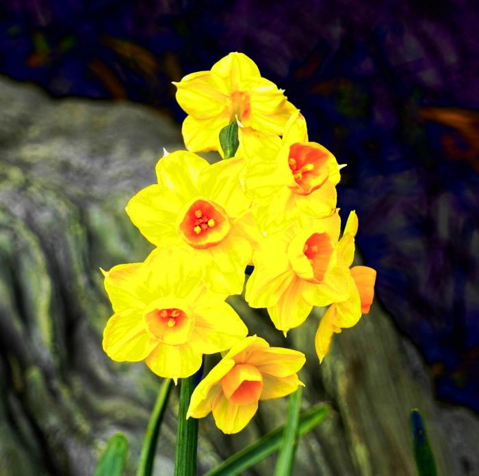 DSC03349 (1)黄色