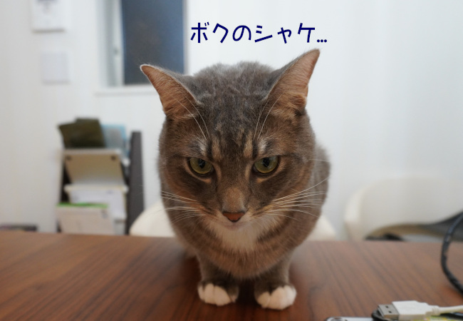 DSC01839e.jpg