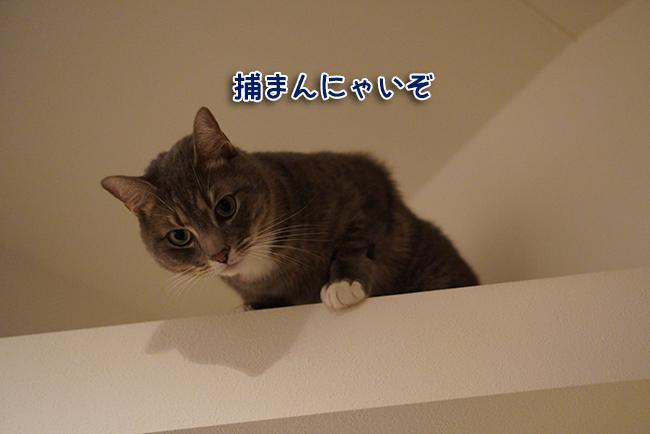 DSC04875.jpg