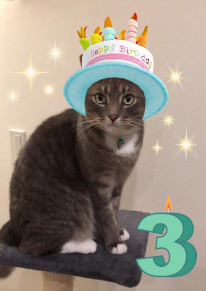 テト3歳の誕生日