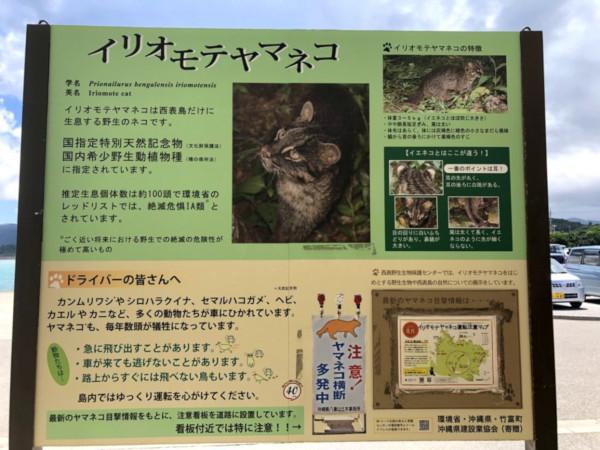 yamaneko_02.jpg