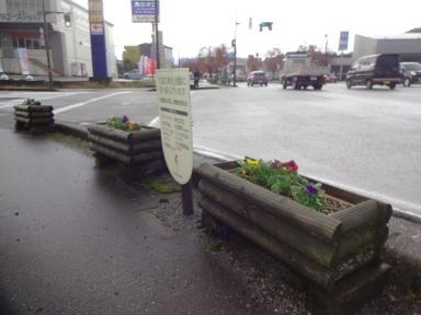 サポート企業名看板も新しい花に映えています。