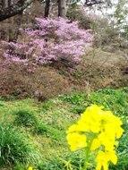 020222花のウォーキング (16)16