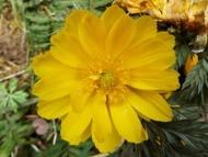 020222花のウォーキング (8)8