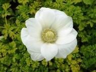 020222花のウォーキング (27)26 - コピー