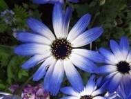 020222花のウォーキング (35)35 - コピー