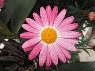 020222花のウォーキング (37)36 - コピー