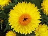 020222花のウォーキング (38)37 - コピー