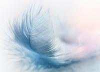 風feather-3010848_1280