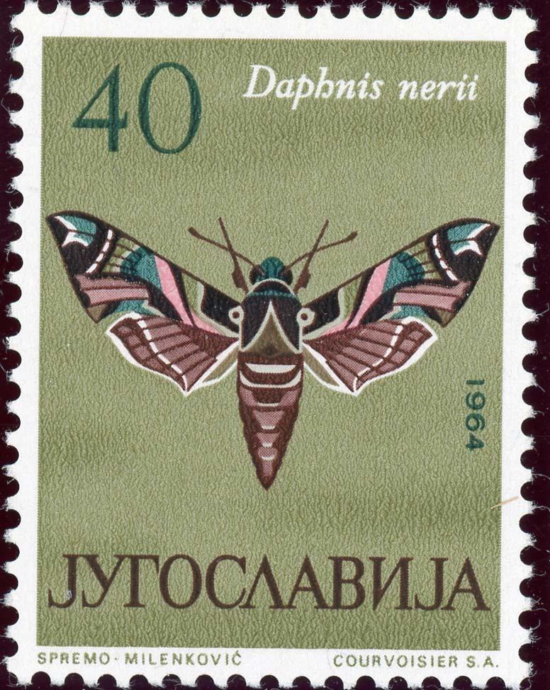 Yugoslavia:1954-3