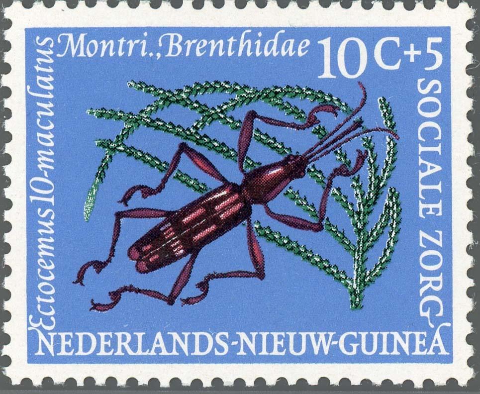 Ned-NewGuinea:1961-2
