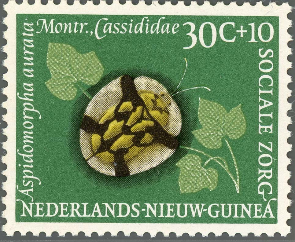 Ned-NewGuinea:1961-4