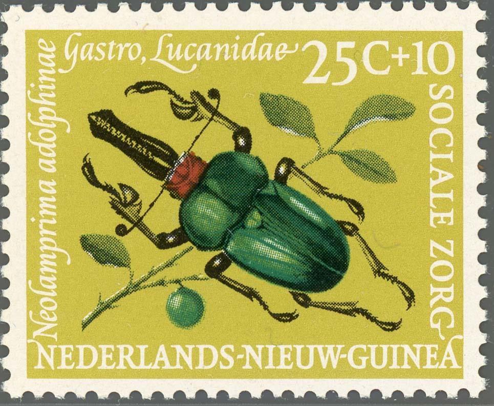 Ned-NewGuinea:1961-3