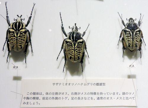 191010inochihoshi44.jpg
