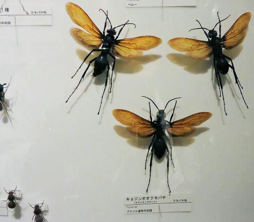 191010inochihoshi46.jpg